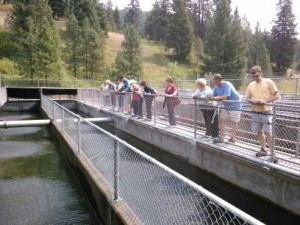 Ride the train and tour the fish hatchery in August 2015.